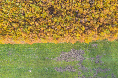 top view of the autumn forest border with a meadow Imagens
