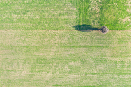 green meadow and tree shadows - view from above