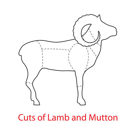 Cuts of Lamb and Mutton.Pattern diagram Illustration
