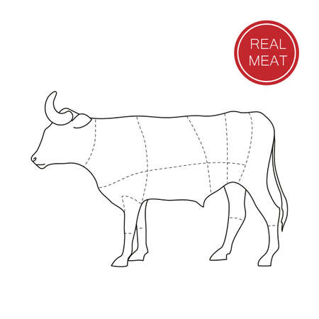 beef cuts: Real meat. Butcher shop. How to cut meat. Barbecue, steaks, meat dishes. Illustration