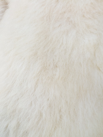 leather background: Close up of white skinned goat fur