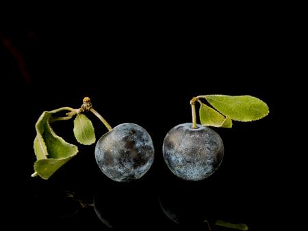 drupe: Sloe,Prunus spinosa - blackthorn on a black background 5 Stock Photo