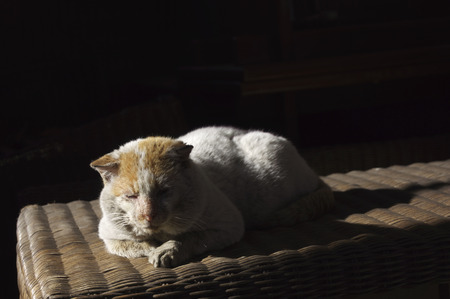 waif: Portrait of old, ill stray cat with shabby fur resting in the sun- lying on a straw wicker table with black background  and room or space for copy, text, your words 3 Stock Photo