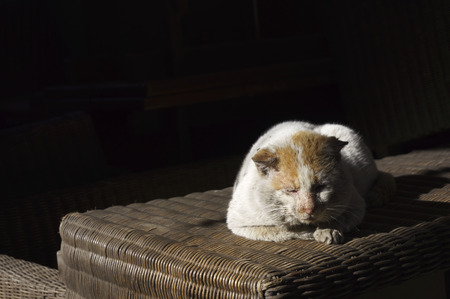 waif: Portrait of old, ill stray cat with shabby fur resting in the sun- lying on a straw wicker table with black background  and room or space for copy, text, your words 4