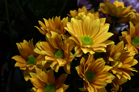 Bouquet of yellow chrysanthemums in a flower shop. Out of focus floral background. Close up of flower arrangement in a vase.
