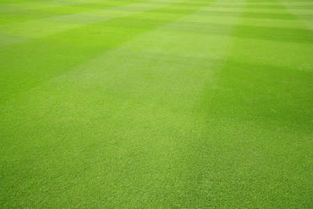 soccer background: Floor grass