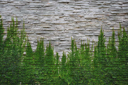 stone wall with ivey photo