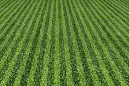 gras maaien: gras aan de bal veld