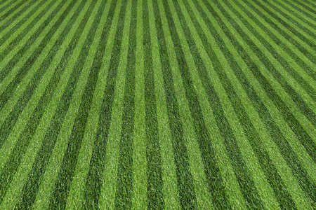 baseball field: grass at the ball field Stock Photo