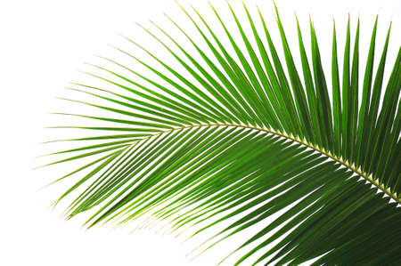 Palm tree Stock Photo - 14432915
