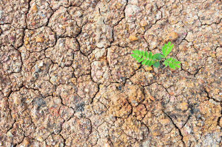New Tree on Dry soil photo