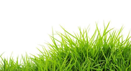 Grass on White photo