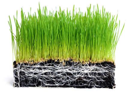 origins: Wheat seedlings and Soil