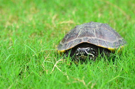 Turtle on grass photo