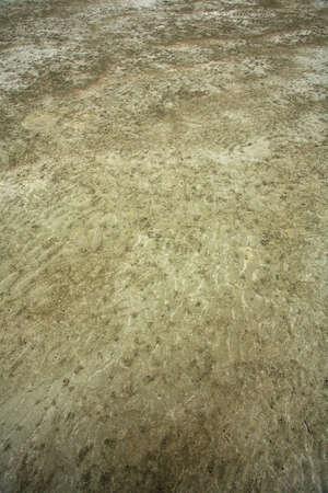 coastal feature: Sandy mud