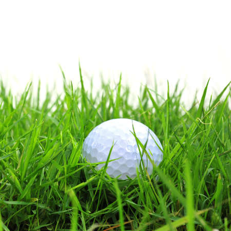 golf ball in the rough Stock Photo - 16485416
