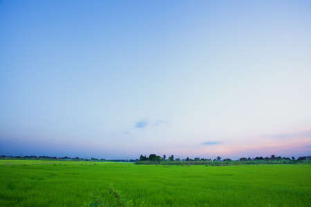 Rice fields photo