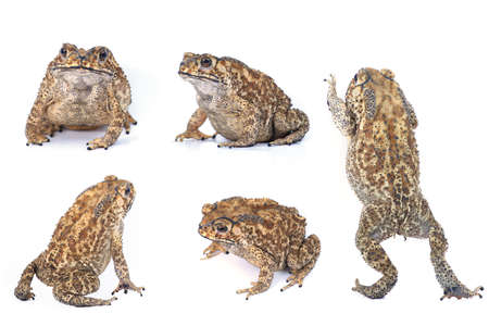Toad Collection photo