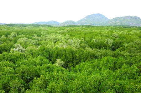 Mangrove Forest Stock Photo - 17115325
