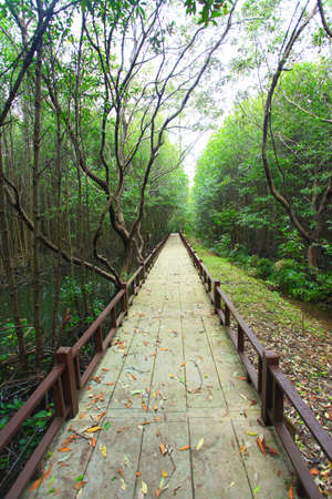 walkway in mangrove forest Stock Photo - 17115474