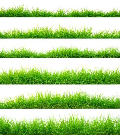 blade of grass: Grass Stock Photo