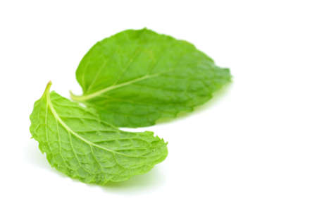Mint leaf photo