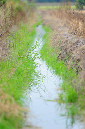 watercourse: watercourse of agriculture Stock Photo