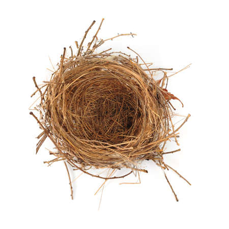 Empty Nest Isolated on White Stock Photo