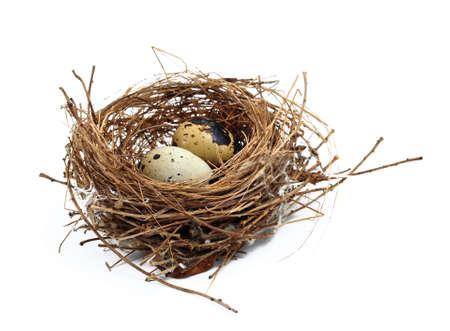 le nid et les oeufs de l'oiseau