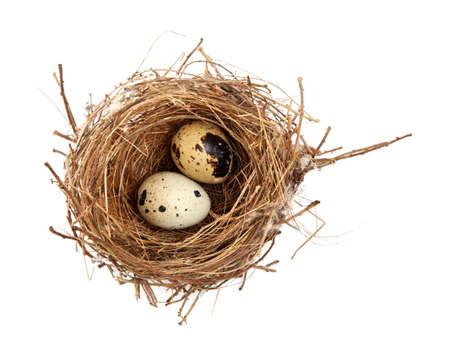 quail nest: birds nest and eggs