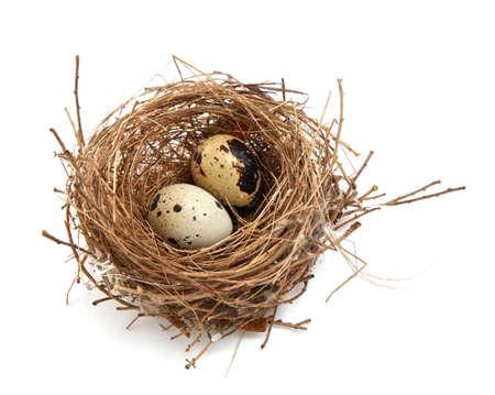 nido de pajaros: nidos y huevos de aves Foto de archivo