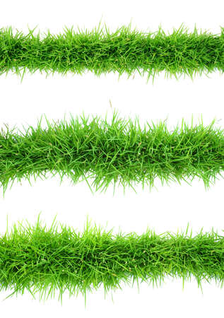 Top view of grass on white background photo