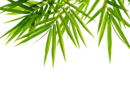 bamboo leaf: bamboo leaves Stock Photo