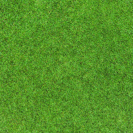 grass background Stock Photo - 22224518