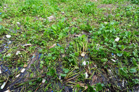 water pollution: Water hyacinth and garbage Stock Photo