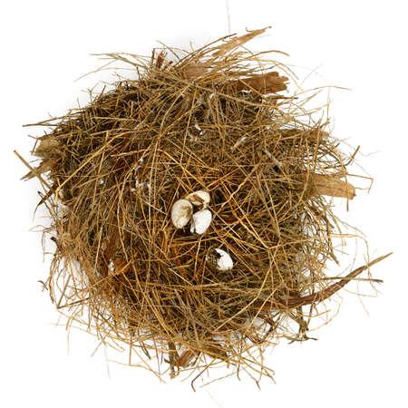 gniazdo jaj: Złamane skarbonkę Zdjęcie Seryjne