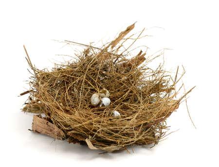 Broken nest egg Stock Photo