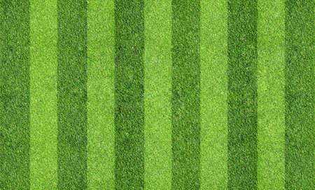 field of grass Stock Photo - 26817931