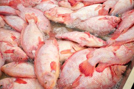 nile tilapia: Nile tilapia nel mercato