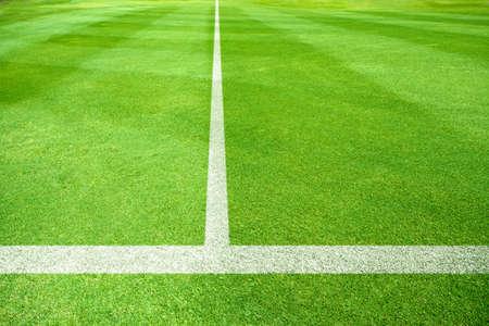 campo calcio: linee bianche di un campo di calcio