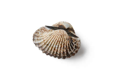 bivalve: cockle on white background