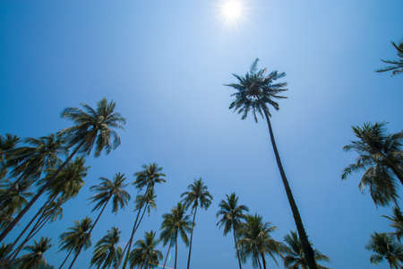 Palm tree with sun photo