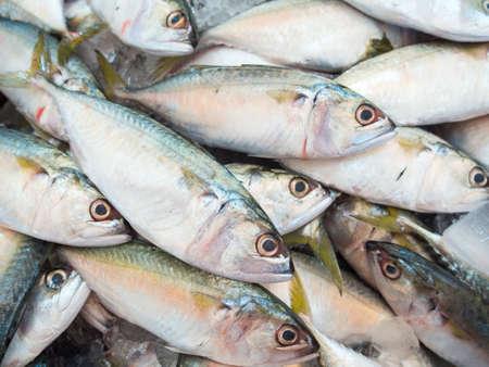 fish vendor: Mackerel fish in market