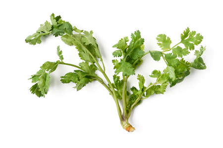 witte achtergrond: parsley on white background
