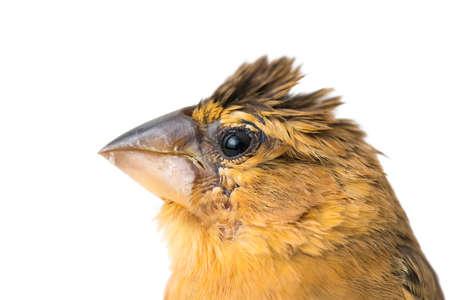 young bird: young bird