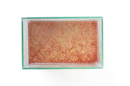 plankton: top view of artemia plankton in the glass tank