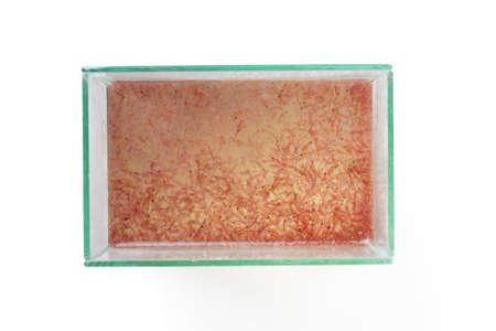 plancton: vista desde arriba de plancton artemias en el tanque de cristal Foto de archivo