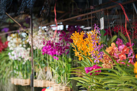 store: orchid flower store in Thailand Stock Photo