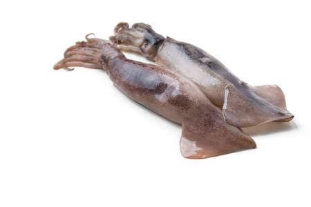fresh squid isolated on white Stock Photo