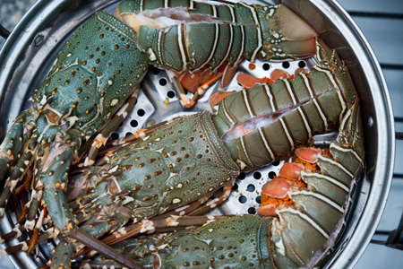 raw lobster in the iron steamer
